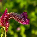 Close up of flower head, Sacramento, California