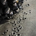 Water drops, falling from clams during low tide, form a moon-like surface in the sand, Muir Beach, California