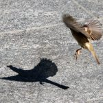 Small bird in taking off in public square at Toledo, Spain