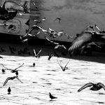 Hundreds of pigeons take flight within a church courtyard, Lima, Peru