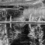 Dead tree log in lake, Lassen Volcanic National Park, California