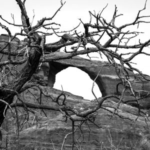 A dead conifer stands in front of Skyline Arch, Arches NP, Utah
