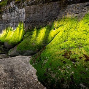 Florescent algae growth along the sea wall at Devil's Punchbowl State Natural Area, OR