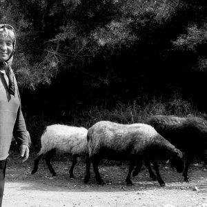 Elderly goat herder with goats along rural road, Greece