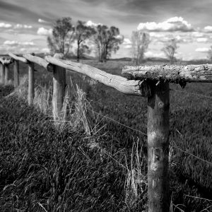 A fence of lodgepole pines runs along the valley of Mormon Row, Grand Tetons NP, WY