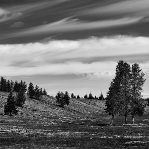 Fallen lodge-pole pines and clouds sweep across the valley floor, Yellowstone NP, WY