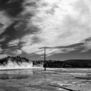 A lone cindered pine tree stands near the Grand Prismatic Spring, Yellowstone NP, WY